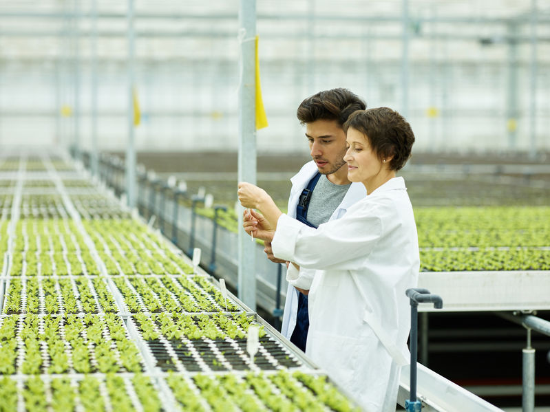 Man and woman in white gowns talking and exploring green sprouts while working in modern industrial agronomy complex